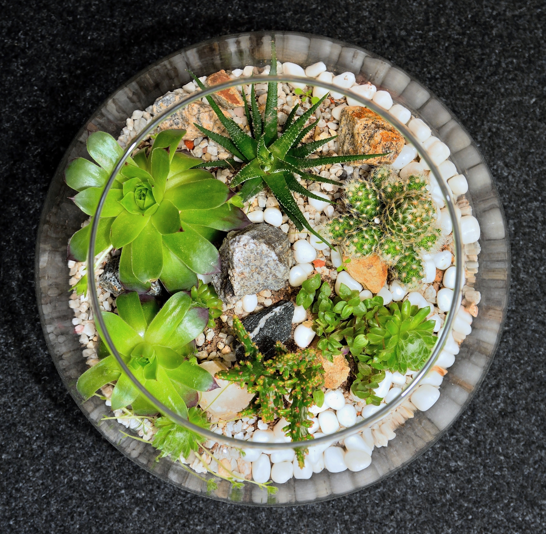 table top indoor decorative miniature garden in clear glass bubble with cactuses and succulents. Decorative glass vase with succulent and cactus plants glass interior terrarium with succulents and cacti